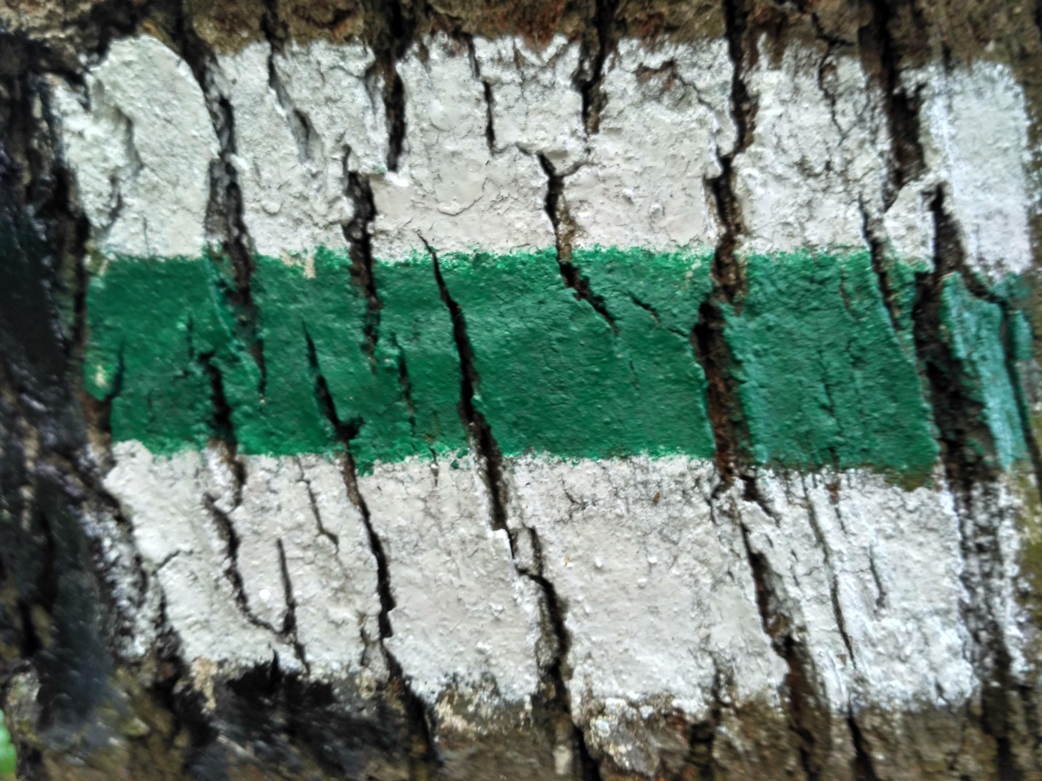 Zielony szlak w Ojcowie