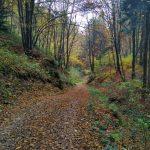 Jesień w Ojcowie, ścieżka szlak czerwony