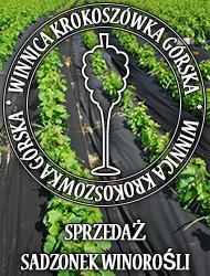 Winnica Krokoszówka-Górska Sadzonki winorośli
